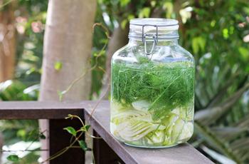 Укропная вода для новорожденных, рецепты приготовления, дозировка, применение