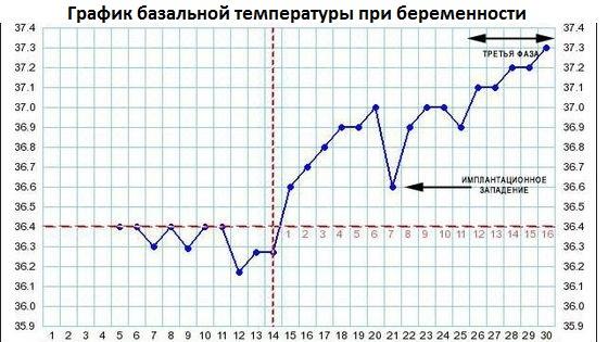 По базальной температуре можно определить овуляцию и возможное зачатие