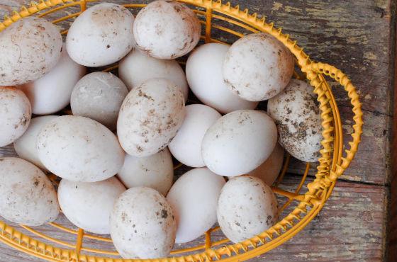 Скорлупа яиц утки нуждается в тщательной обработке