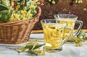 Липовый чай: полезные и лечебные свойства, противопоказания, как выбрать и приготовить