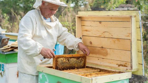 Покупать мед лучше у проверенных пасечников