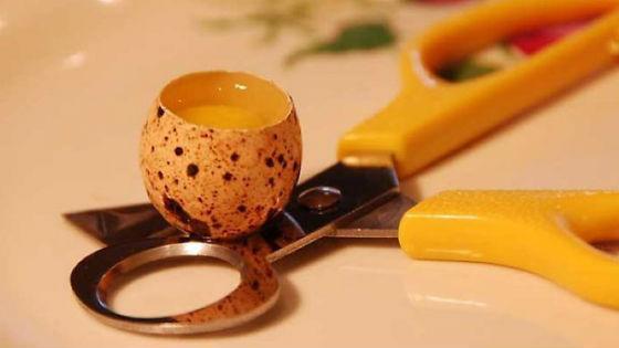 Специальные ножницы для перепелиных яиц