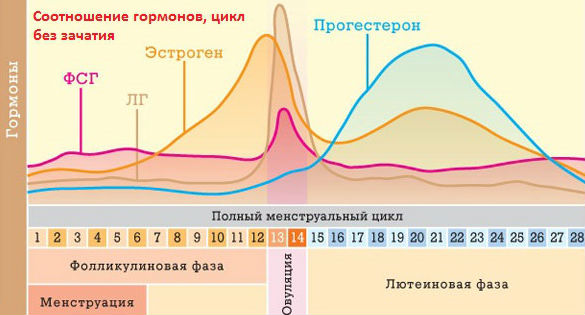 Изменение гормонального фона по фазам менструального цикла