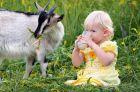 Козье молоко для детей первого года жизни