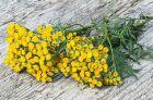 Применение цветков пижмы от гельминтов