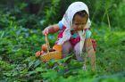 Можно ли детям давать лесные грибы