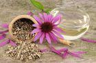 Рецепты применения эхинацеи пурпурной