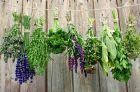 Заготовка и сушка травы для похудения