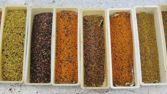 Цвет пыльцы различается в зависимости от растения, с которого она была собрана