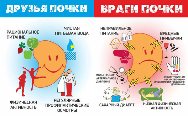 Здоровьесберегающие факторы для почек